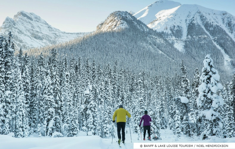 A skier in yellow and a skier in purple cross coutry ski through a pine forest in the Rocky Mountains